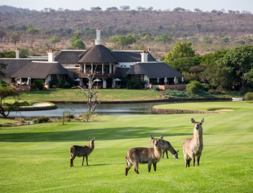 Luxury Kruger Park Accommodation: What to Expect