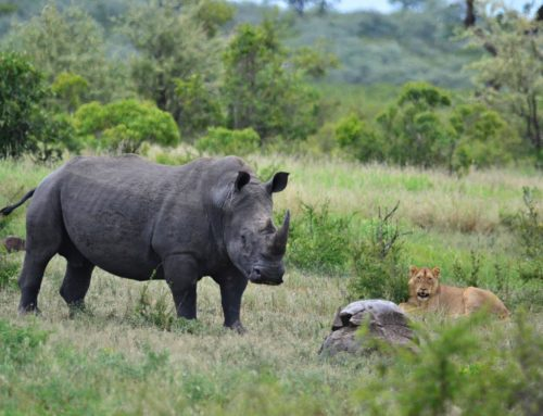 5 Things to do in the Southern Kruger