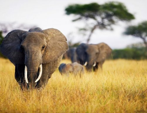 Mistakes to avoid when booking your safari online