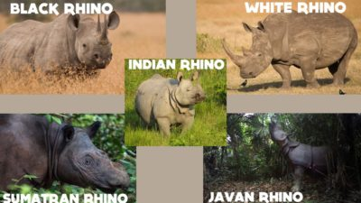 5-species-of-rhino-slide