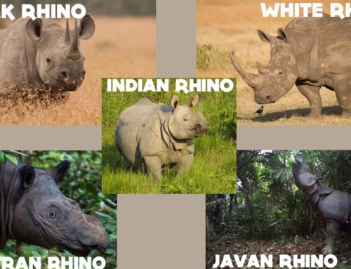 Celebrating Rhinos this September
